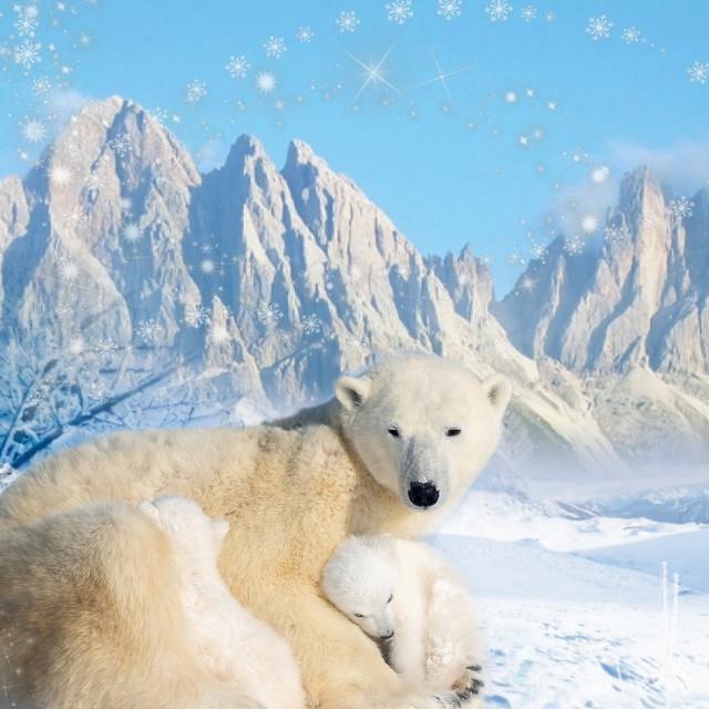 #landscape #snowing #icebear #motherandchild  #endangered #mountain #winter