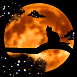 fullmoon cat blackcat orange clouds stars nightsky freetoedit srcblackclouds blackclouds