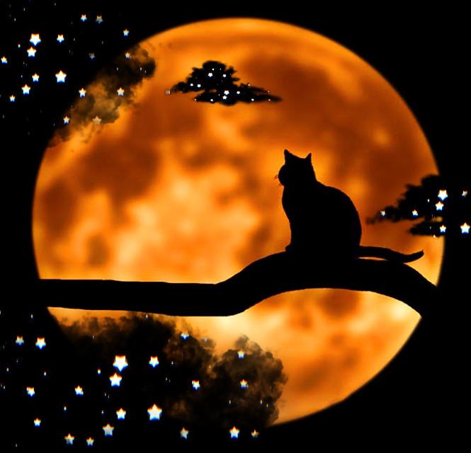 #fullmoon #cat #blackcat #orange #clouds #stars #nightsky  #srcblackclouds #blackclouds