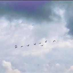 freetoedit flockofbirds