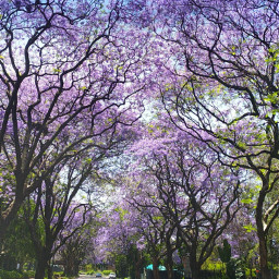 southafrica nature photography lavender purple freetoedit