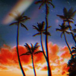 freetoedit palmtrees beach heaven sunset