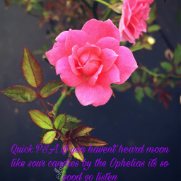 lgbt music bands moonlikesourcandy ophelias freetoedit