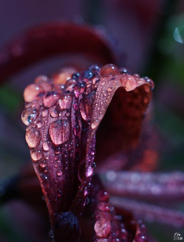 #macrophotography #waterdrops #crispeffect #naturephotography #flower