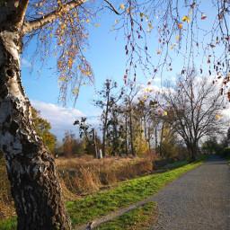 sunnyday birch way niceview background remixit freetoedit