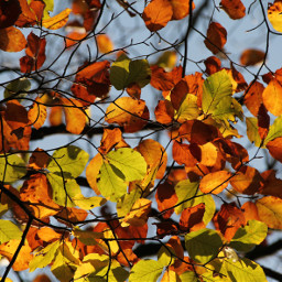 freetoedit nature photography intothegreen autumnleaves