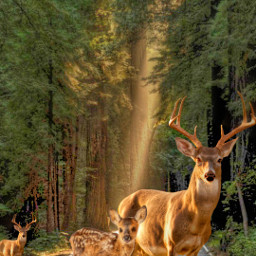 venado freetoedit ircgorgeousforest gorgeousforest