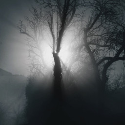 freetoedit photography foggyday monochrome dark