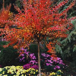 tree flower colorful naturephotography