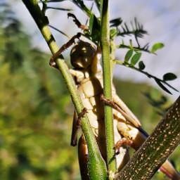 grasshoppers sxm freetoedit