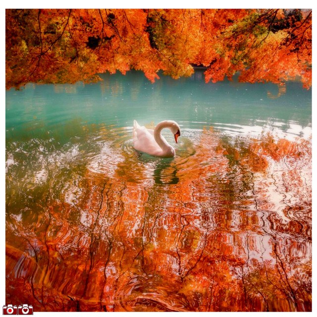 #curatorlooking  #love #instagood #photooftheday #featuredartist #beautiful #happy #inspirethedayforyou #camera #photographer  #picoftheday #follow #vampikisses  #art #instadaily #nature #November #instagram #instagood #beauty #amazing #instamood #instahappy #photography #photo #igersjp