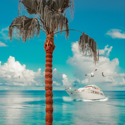 edited madewithpicsart picsart stickers tree palmtree ocean boat yacht clouds seagulls birds leaf sky remixed