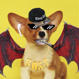 thug thuglife casquette dog chien airpod aile ailes demon demondog doglife thug_life style lunette lunettes petard drogue drugs freetoedit