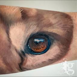 lion eye eyes lioneyes liontattoo tattoo inkgoddess tattoosbyhaylo haylotattooartist utah tattooartist haylo