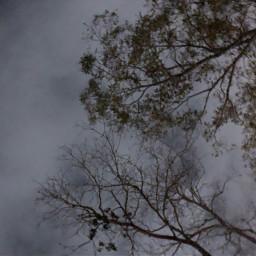 night sky nightsky freetoedit trees