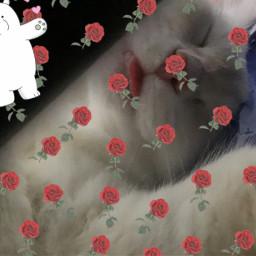 love freetoedit srcrosesarered rosesarered
