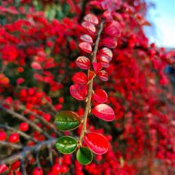 kinora autumn autumncolors autumnvibes sunlight bright beautiful loveit nature freetoedit