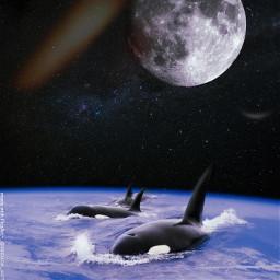 space whales surreal wallpaper sea freetoedit unsplash
