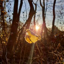 freetoedit remixit remixme landscape nature autumn fall leafs sunrise morning frosty cold