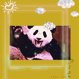 panda freetoedit