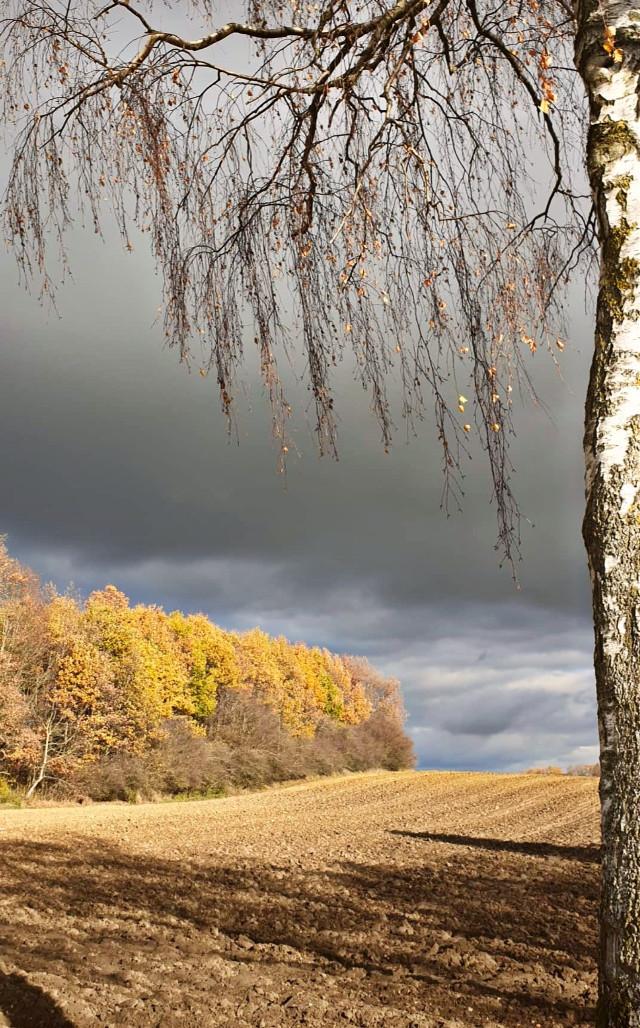 #freetoedit #remixit #remixme #landscape #nature #autumn #fall #leafs #nofilter