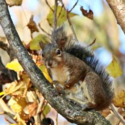squirrel tree closeup myphoto 22/11/2020 22