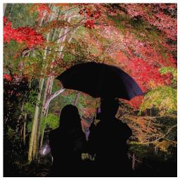 japan freetoedit curatorlooking love instagood