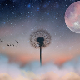 skyline freetoedit ircdandelionsilhouette dandelionsilhouette