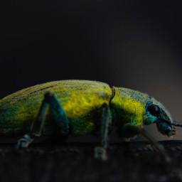 freetoedit beetle colorful photography picsart