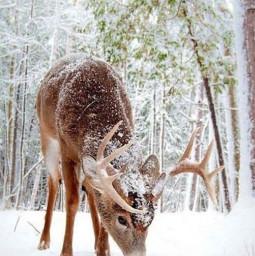 xmas reindeers snow santa aussie winter summer aesthetic charlid addisonrae dunkin sunrae ily hottt undieslady love hashtagz snowyday masks anime art 47followers ilyyall ibf ava