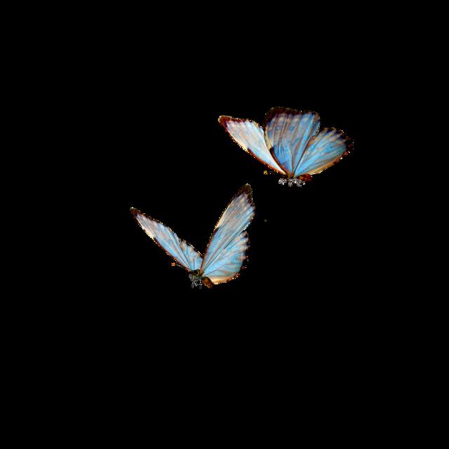 #butterfly # #pink #watercolor #flower #rose #purple #colorful #color #aesthetic #frame #background #purpleflower #freetoedit #blue #animal #butterflyeffect #beautiful #cute #nice