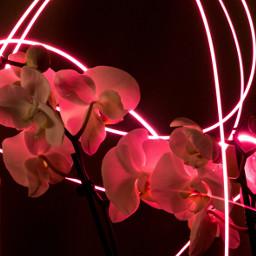 flower freetoedit neon lighy