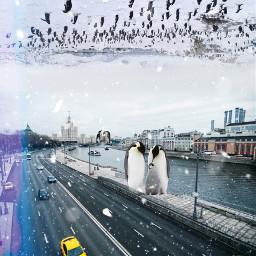 freetoedit city moscow pinguin winter north город москва пингвин зима север picsart пиксарт