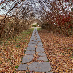 freetoedit autumn fallenleaves arch