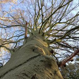 kinora bigtree lookingup baretree oldtree freetoedit