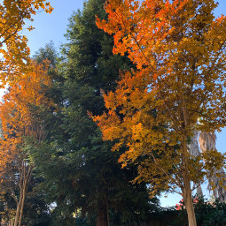 freetoedit fall autumn trees nature