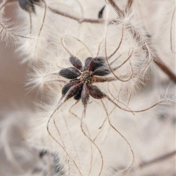 freetoedit nature wildplants closeup simplethingswithbeauty branches plumes simplenature warmneutrals softcontrast closeupphotography