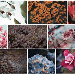 naturephotography macrophotography flowerphotography birdsphotography