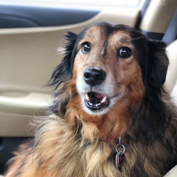 floofy doggo cutedoggo