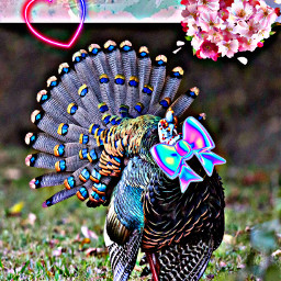 strutyourstuff turkey bow hearts thanksgiving happy text quotes freetoedit