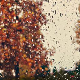 itsrainingoutside raindrops mywindow autumnweather rainydays freetoedit