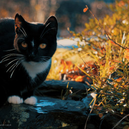 photography myphoto cat catsofpicsart colors myedit november cold frozen beauty sweet cute heypicsart like love follow