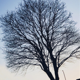 photography photographyaccount newaccount sky thesky skypicture photo tree treepicture