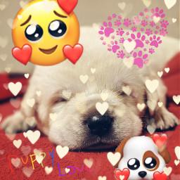 puppy puppylove cutepuppy freetoedit