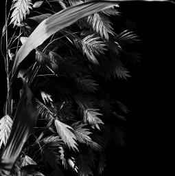 blackandwhite minimal darkphotography