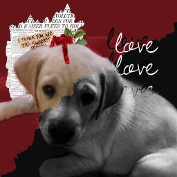 puppy freetoedit