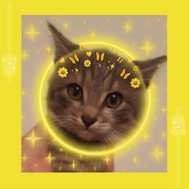 #freetoedit #freetoedit #yellow #yellowbackground #background #aesthetic #aestheticbackground #neon #yellowneon #neoneffect #neoncircle #yellowsticker #cat #cats #catsofpicsart