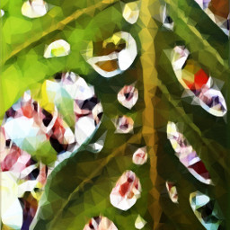 myphoyo myedit oileffect magiceffects piante closeup