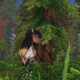 starstable sso ssohorse ssowildhorse starstableonline ssobackground horsegame freetoedit remixit pleasefollowme plzlikethis