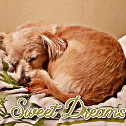 sweetdreams freetoedit